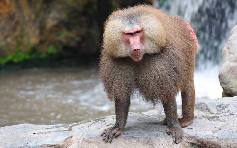 Información sobre los Monos
