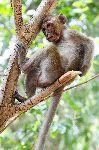 Macaco_descansando_150