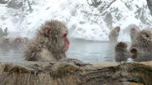 Macacos_en_aguas_termales_600