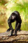 Spider Monkey On Alert