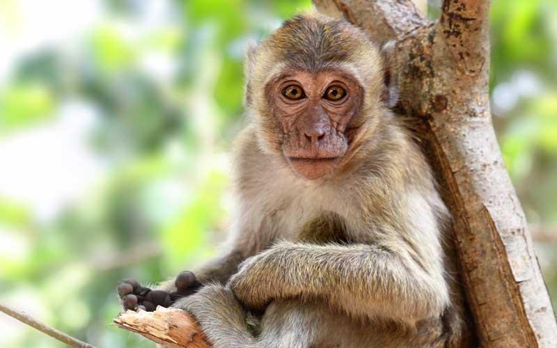 Anatomía de los Monos