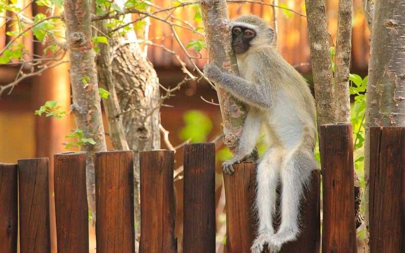 Conservación de los monos