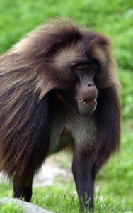 Curiosidades sobre los monos.