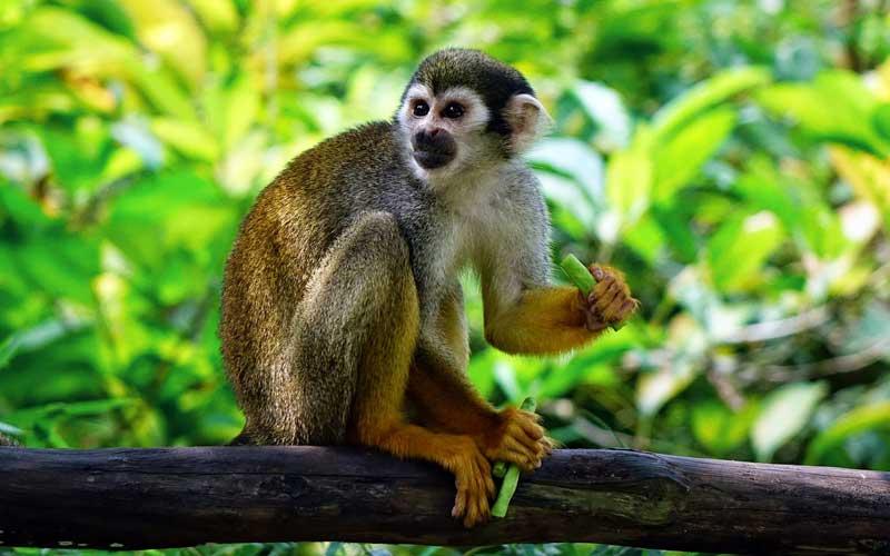 Diet of the monkeys.