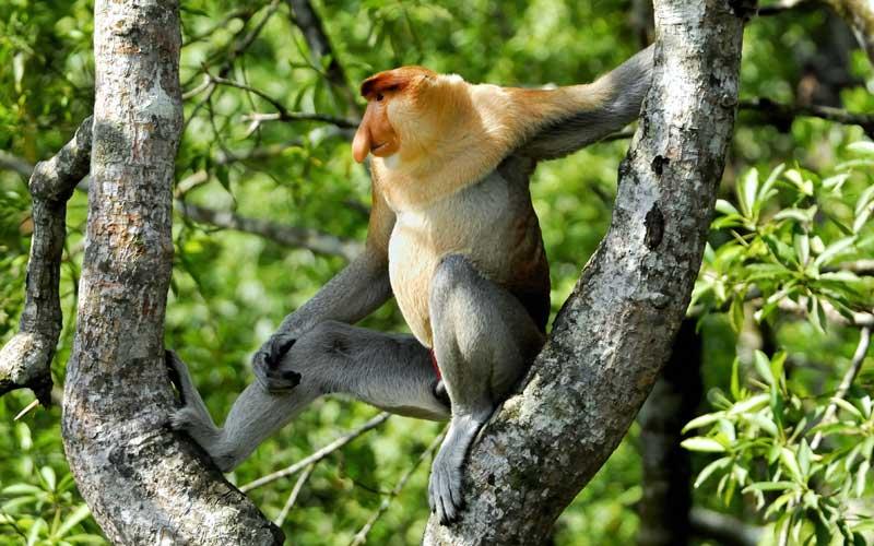 Range of monkeys.