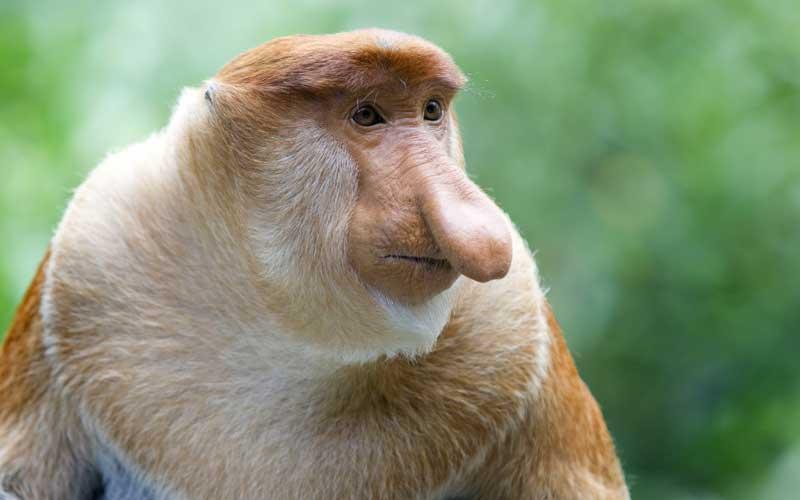 Especies de Monos