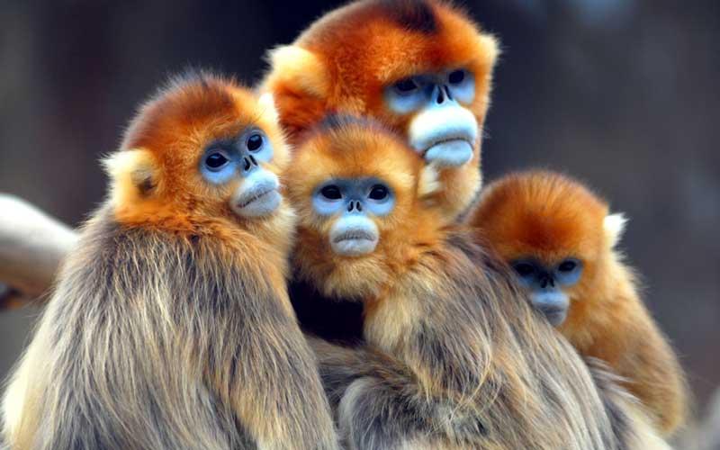 Evolución de los Monos