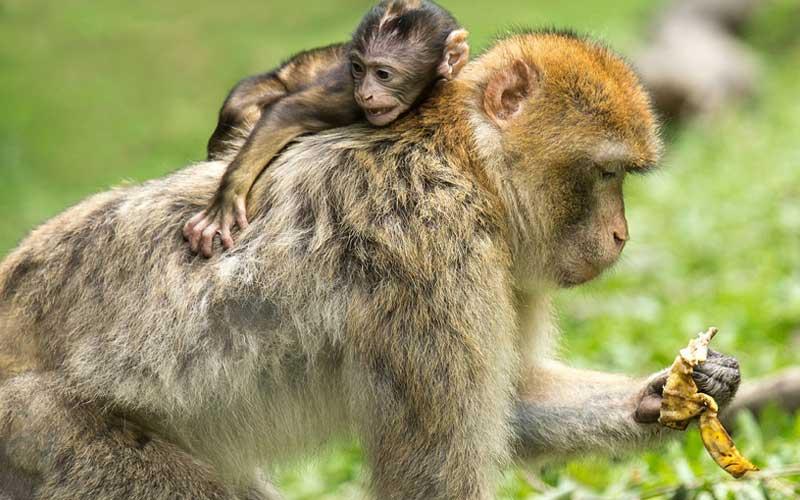 What do monkeys eat?