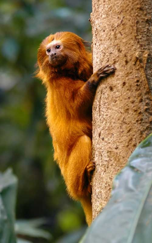 Tipo de hábitat de los monos.