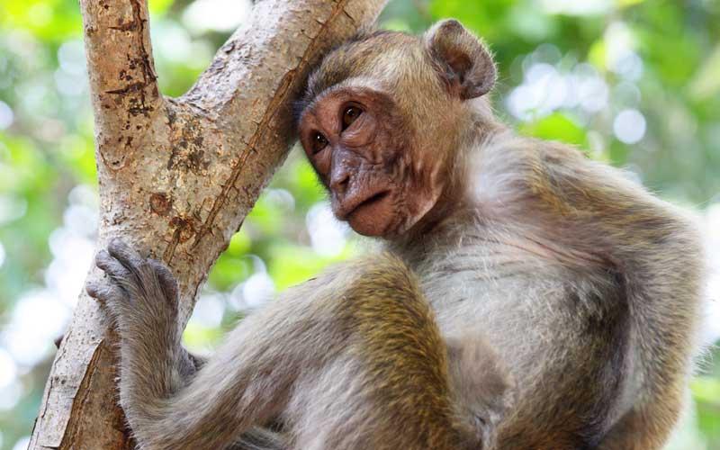 Distribución y Hábitat de los Monos