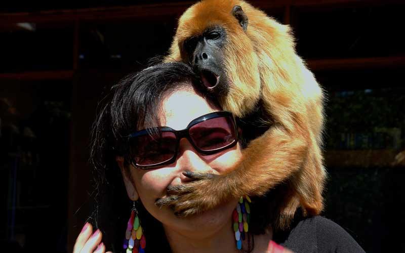 Humanos y Monos