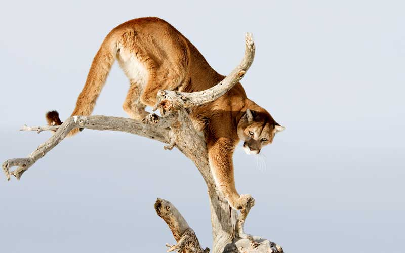Natural enemies of monkeys.