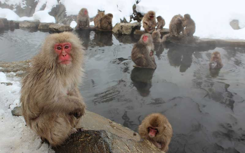 Monkey Social Structure